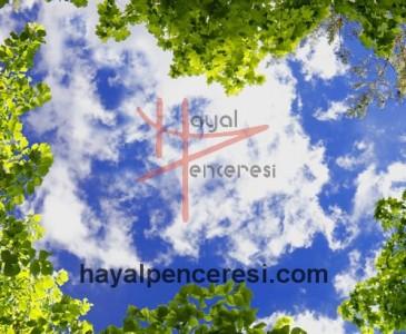 Ağaçlar ve Gökyüzü