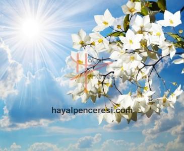 Çiçekler ve Gökyüzü